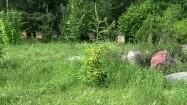 Pasieka - ule wśród zieleni