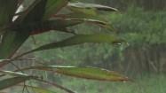 Krople deszczu spadające na liście palmy