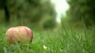 Sad - jabłko leżące na trawie