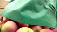 Wsypywanie jabłek do drewnianej skrzyni