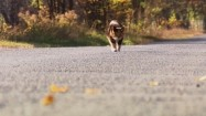 Spacerujący kot