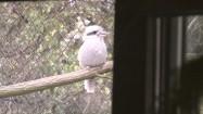 Ptak w ogrodzie zoologicznym