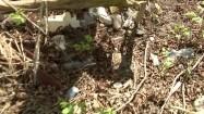 Odpady w lesie