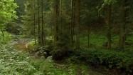 Strumień płynący przez las