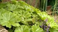 Rośliny w przydomowym ogrodzie
