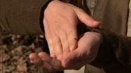 Kleszcz na dłoni