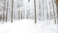 Puszcza Białowieska zimą