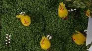 Wielkanocne dekoracje z rzeżuchy