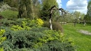 Roślinność w ogrodzie