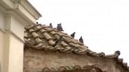 Gołębie siedzące na dachu