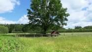 Polna ścieżka i zagroda dla kóz