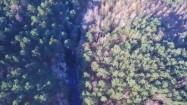 Rzeka w lesie z lotu ptaka