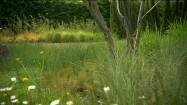 Bezlistne drzewo i zielona trawa