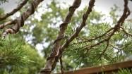 Gałęzie owinięte drutem