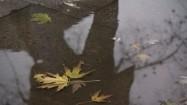 Liście leżące w kałuży
