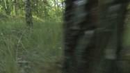 Runo leśne